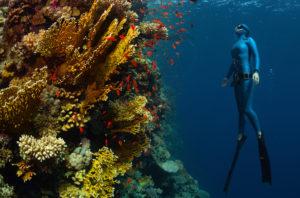 Apnea Freediving
